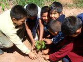 Schüler beim Pflanzen eines Bäumchens