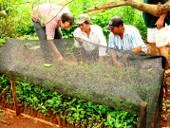 Schulung für Kleinbauern zum Einrichten von Baumschulen