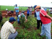 Agroforstwirtschaft und Kleinbauernarbeit