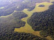 natürliche Graslandschaft