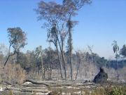 verbrannter Urwald