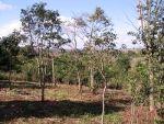 Aufforstungsmaßnahmen in der Umgebung des Schutzgebietes