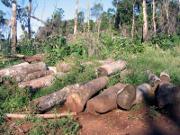 illegaler Holzeinschlag