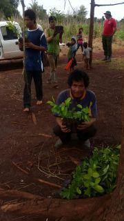 Yerba para las comunidades indígenas