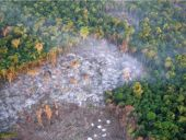 Monitoring of the protected area: slashing and burning discovered by plane
