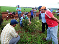 Agro-forestry and work with smallholders