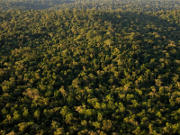 Aerial view over the forest