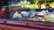 Delivery of Rabbits