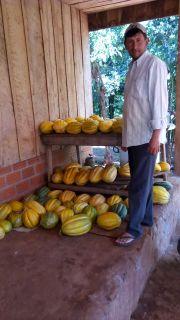 Fructiferous harvests