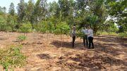 Monitoring of Eucalyptus with INFONA