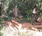 Deforestación por monocultivo