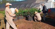 Donación de 200 plantines de especies frutales
