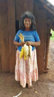 Exitosa cosecha de maíz y poroto