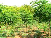 Reforestación