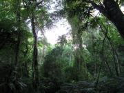 im Urwald