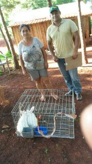 Entrega de Conejos y Balanceados