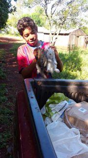 Entrega de conejos