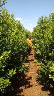 Yerba Sustentable en Zona de Influencia San Rafael