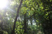 Bosque con el sol de fondo