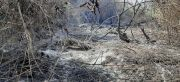 Incendios en la Reserva para Parque Nacional San Rafael