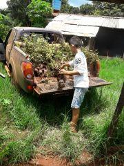 Entrega de pollitos y plantas nativas