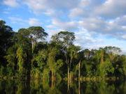 Selva en San Rafael