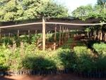 Vivero forestal en Alto Verá